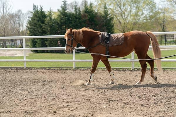 Paddockgitter Pferde bestehen aus einem huffreundliches & isolierendes Material.